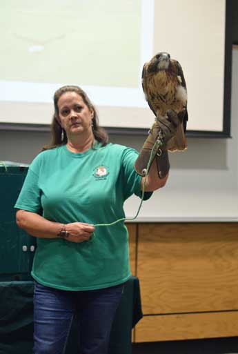 RRCA Volunteer Tina Miller with Hope the red-tailed hawk.